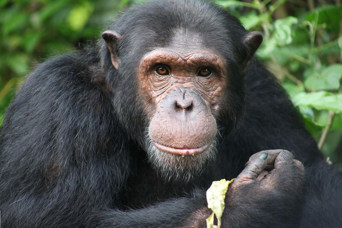 Boumba is a Rescued Animal in Africa