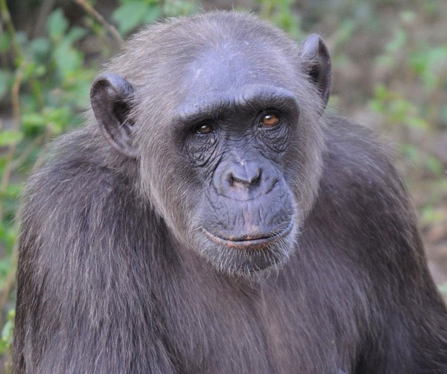 Hope is a Rescued Animal in Africa