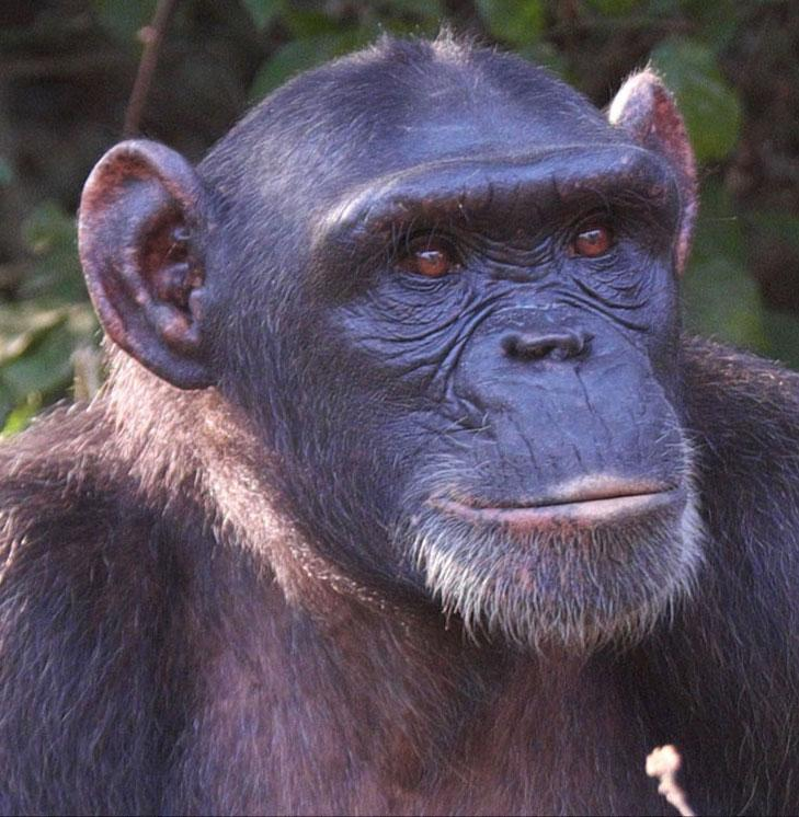 Manni is a Rescued Animal in Africa