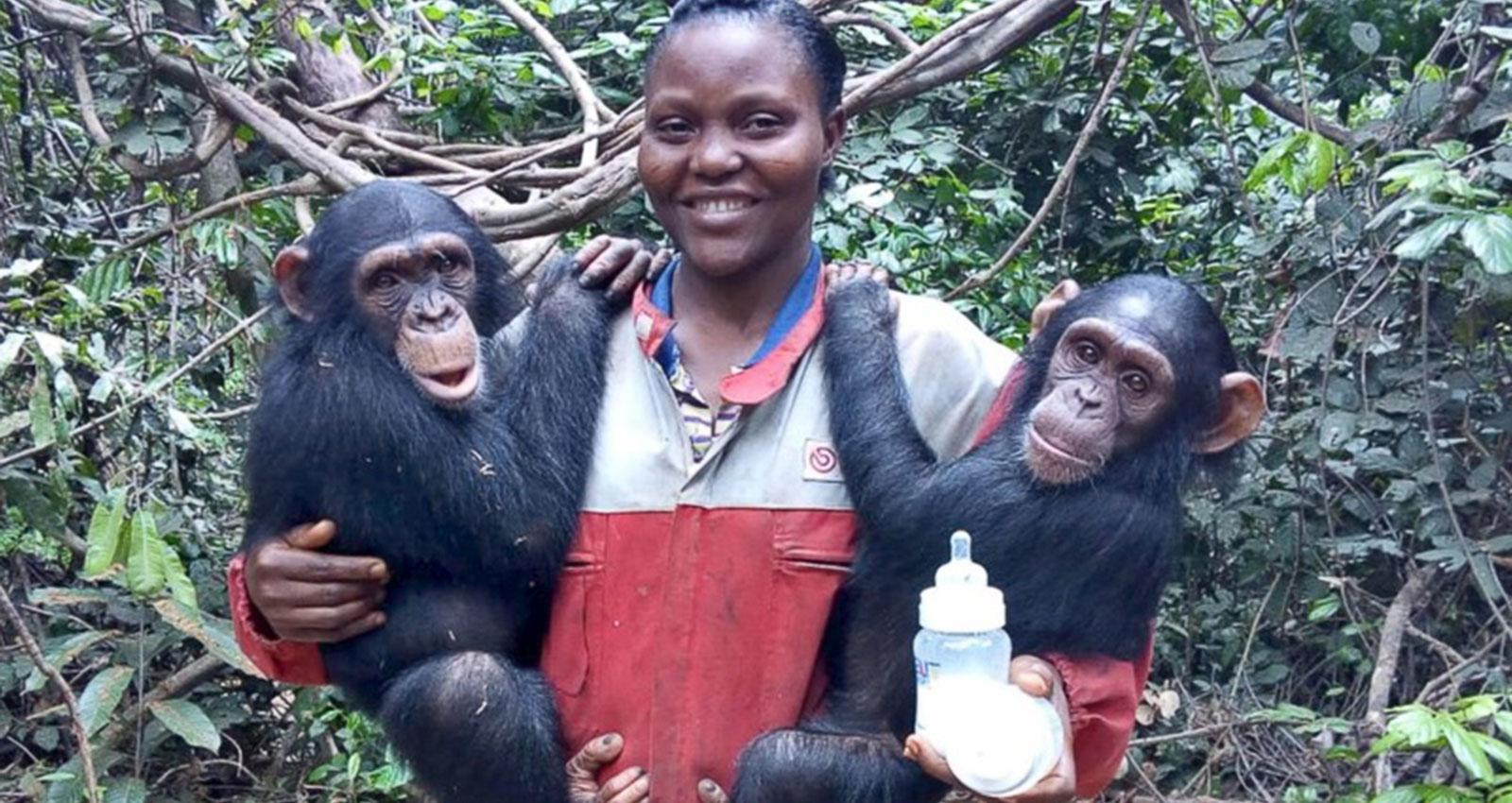 Woman with Rescued Chimps in Rescue Center