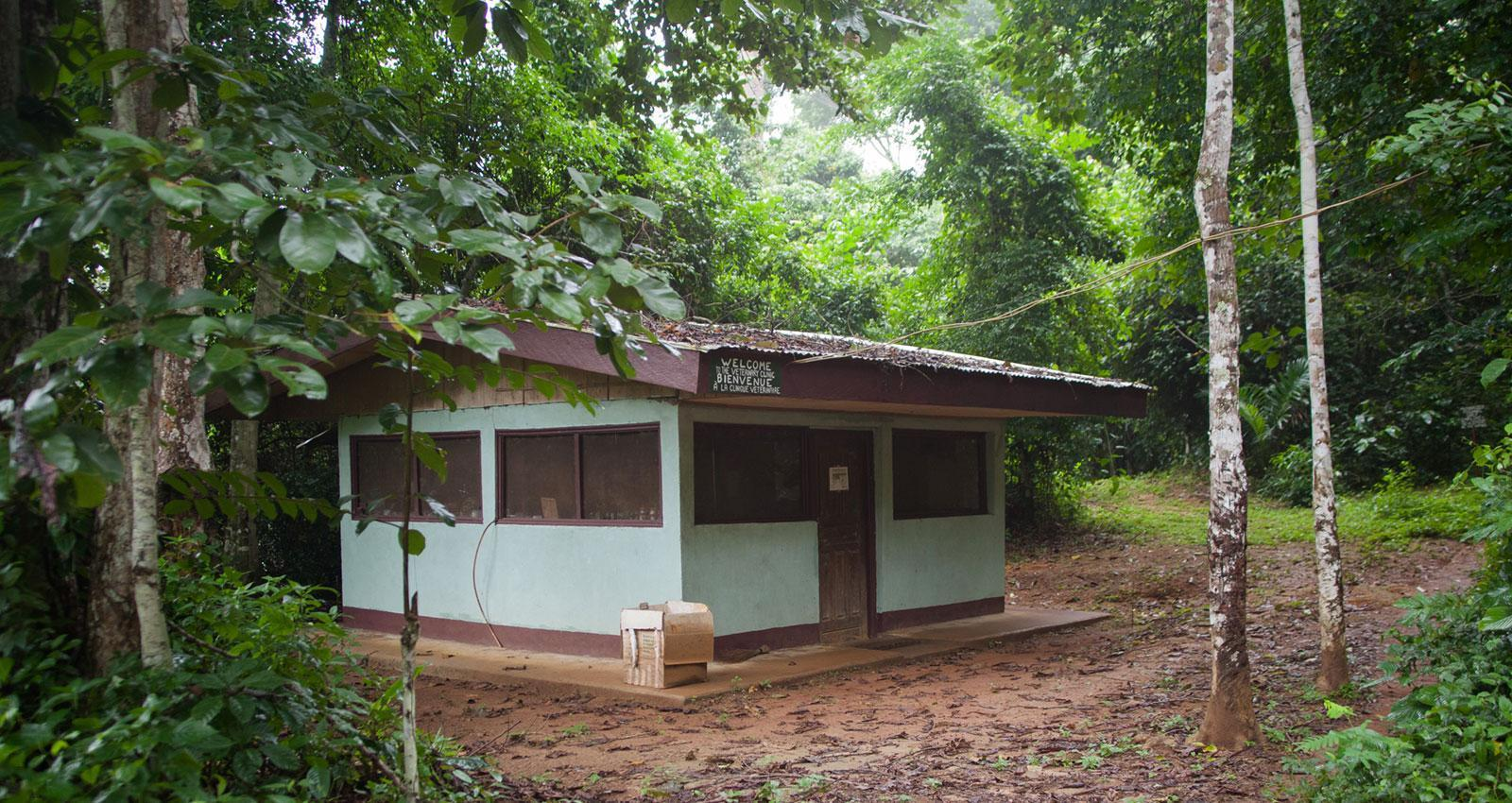 Main Building in Sanaga Yong Chimpanzee Rescue