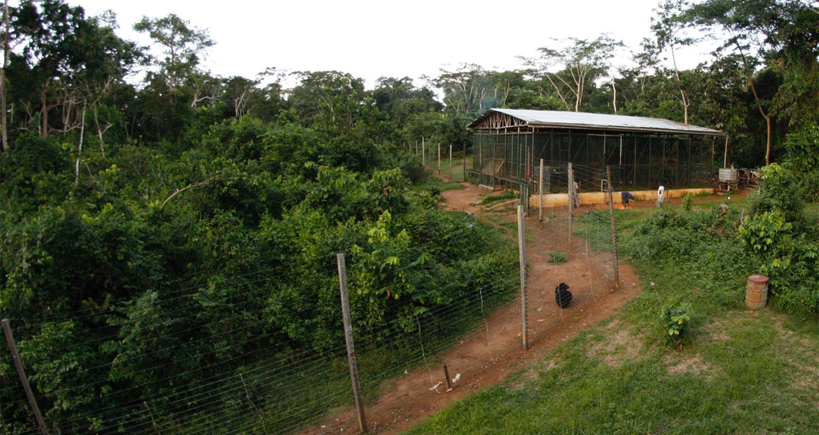Sanctuary for Rescued Chimps